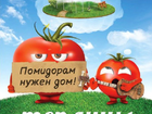 Уникальное изображение  Теплицы из поликарбоната Можайск 39122968 в Можайске