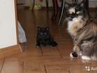 Изображение в   Отдадим в добрые руки котёнка от домашней в Оренбурге 0