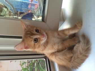 Скачать изображение Продажа кошек и котят 2 симпатяги-КОТИКИ (мальчики) ищут добрых хозяев 37039597 в Оренбурге