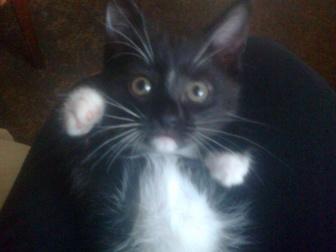 Свежее foto Отдам даром - приму в дар Веселые котята 38433944 в Оренбурге