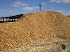 Увидеть фото Строительство домов Щепа оптом, древесная щепа 71745985 в Павловске