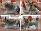Изображение в Домашние животные Услуги для животных Груминг-салон Грумми приглашает маленьких в Пензе 0