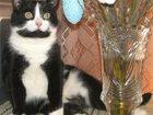 Фотография в Потерянные и Найденные Потерянные Пропала кошка 05 июля 2015 г. на дачах СТ в Пензе 5000