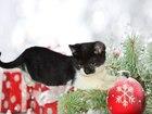 Фотки Домашняя кошка смотреть в Пензе