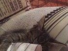 Просмотреть foto Отдам даром Отдам котенка в добрые руки 37190273 в Пензе