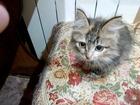 Увидеть изображение Отдам даром Отдам котенка в добрые руки, Пушистая девочка 37995923 в Пензе