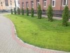 Уникальное изображение Архитектура и дизайн Газон, Рулонный газон, Посевной газон 38381441 в Пензе