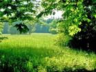Просмотреть изображение Коммерческая недвижимость В продаже земельный участок СНТ «Дубрава» посёлок Ахуны 39122153 в Пензе