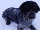 Уникальное фото Потерянные Пропали две собаки 39167535 в Пензе