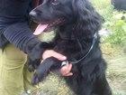 Скачать фотографию Отдам даром - приму в дар отдам в добрые руки очень добрую и весёлую собачку! 40074255 в Пензе