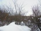 Скачать изображение  Продам зем, участок с дачным домиком в Пензе 69060339 в Пензе