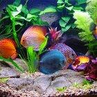 Проработка дизайна и обслуживание аквариумов