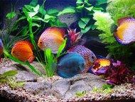 Проработка дизайна и обслуживание аквариумов Выполню все виды услуг по установке