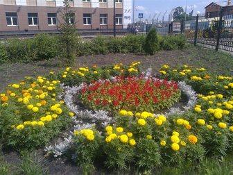 Увидеть foto Ландшафтный дизайн Цветы постоянноцветущие, Клумбы и цветники, 32484406 в Пензе