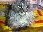 Фото в Help! Потери Потерялся кот.   20. 04. 2016 в районе Заостровка в Перми 0