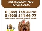 Увидеть фото  Стрижка собак и кошек в Первоуральске 38475156 в Первоуральске