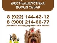 Стрижка собак и кошек в Первоуральске Профессиональная стрижка, груминг, триммин