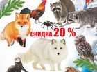Уникальное фотографию  Приглашаем посетить Веселый контактный зоопарк 39167301 в Пестово