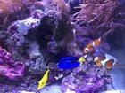Фото в Рыбки (Аквариумистика) Купить аквариум продам морской рифовый аквариум 200 литров в Петропавловске-Камчатском 140000