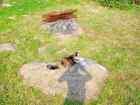Просмотреть foto Найденные питомцы ПРОПАЛА ТРЕХЦВЕТНАЯ КОШКА НА УЛ, НОЙБРАНДЕНБУРГСКОЙ 63985591 в Петрозаводске