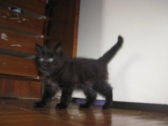 Скачать фото Отдам даром - приму в дар Отдам котят 33660300 в Петрозаводске