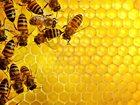 Новое foto  Продаём мёд от пасечников без посредников 33680518 в Подольске