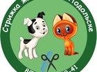 Уникальное foto Стрижка собак Стрижка животных в Подольске 54986834 в Подольске