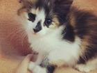 Уникальное фотографию Отдам даром - приму в дар Котята в дар от домашней кошки 67786630 в Подольске