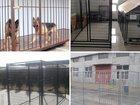 Изображение в Домашние животные Разное Продам вольеры для собак и птиц.   -Из сетки в Пскове 3500