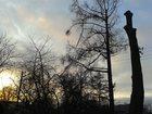 Фото в Услуги компаний и частных лиц Разные услуги Занимаюсь профессиональным удалением деревьев в Пушкино 4000