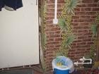 Скачать фотографию Квартиры Продам комнату в Александрове 67786704 в Пушкино
