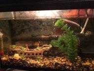 Продам два аквариума со всеми сопутствующими товарами Продам два аквариума - 12