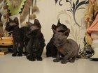 Фотки Донской сфинкс смотреть в Раменском