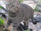 Фотография в Потерянные и Найденные Потерянные 1 мая в районе Радиозавода пропала кошка в Рязани 0