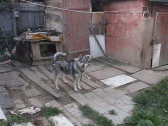 Фотки и картинки  смотреть в Рязани