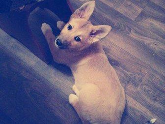 Новое фотографию Продажа собак, щенков отдам в хорошие руки 34334792 в Рязани