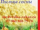 Фотография в Красота и здоровье Услуги народной медицины Пыльца сосны - продукт народной медицины, в Ростове-на-Дону 0