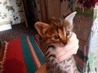 Смотреть фото Отдам даром Отдам котят в хорошие руки 34850890 в Ростове-на-Дону