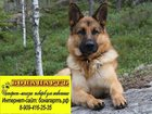 Уникальное изображение  Интернет-магазин электронных ошейников для собак, 35065337 в Ростове-на-Дону
