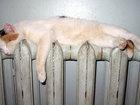 Свежее фото Разные услуги Сдать старые радиаторы отопления можно нам! 36648210 в Ростове-на-Дону