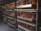 Уникальное фото  Производство ферм для домашнего птицеводства под ключ, 37641262 в Ростове-на-Дону