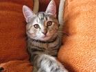 Фотография в   Отдам котёнка. Чудесная девочка - 3 месяца. в Ростове-на-Дону 0