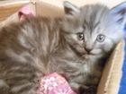 Смотреть фотографию Отдам даром - приму в дар котенок мальчик 39162201 в Ростове-на-Дону