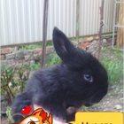 Продаю крольчат