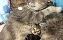 Передержка кошек и собак