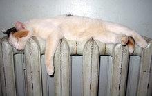Сдать старые радиаторы отопления можно нам