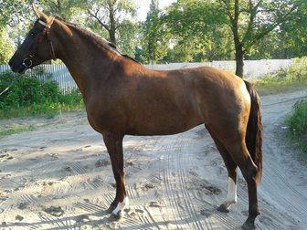 Свежее фотографию Другие животные продам спортивную лошадь 33138898 в Ростове-на-Дону
