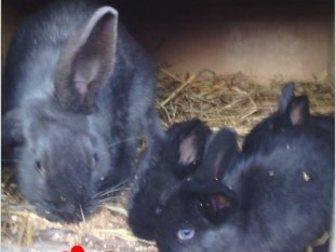 Скачать бесплатно изображение  Продаю крольчат, 35269721 в Ростове-на-Дону