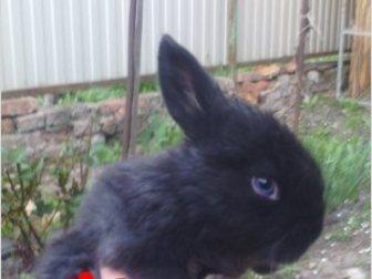 Новое фото  Продаю крольчат, 35269721 в Ростове-на-Дону