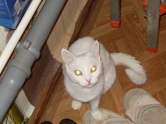 Новое foto  приму в дар для больных животных 40564737 в Ростове-на-Дону